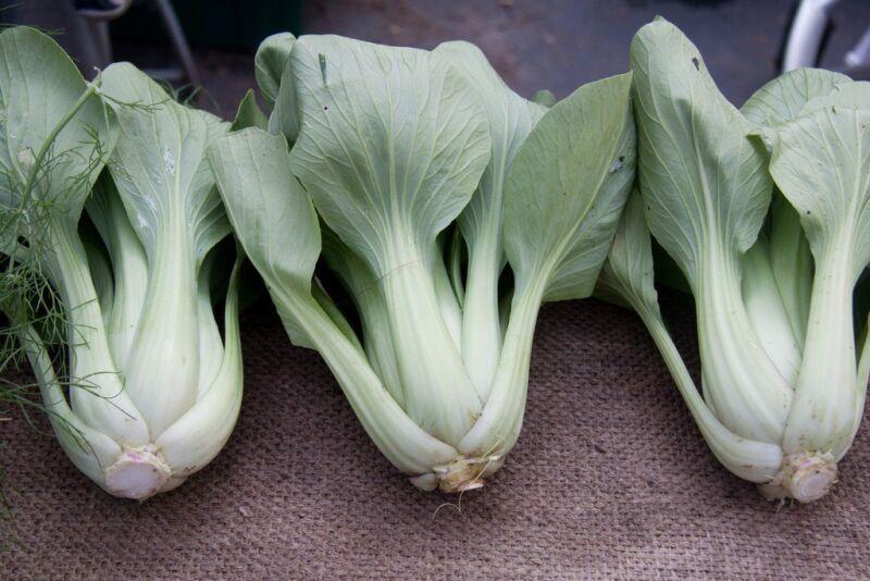 Примеры Pantone самых разный оттенков зеленого рис 2